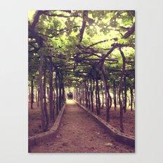 Lemon Grove in Ravello, Italy Canvas Print