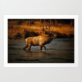 Madison Bull Art Print