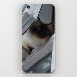 Icelandic Siamese Cat iPhone Skin