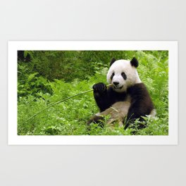 Enthralling Super Gorgeous Grown Animal Chewing On Bamboo In Jungle Ultra High Pixels Art Print