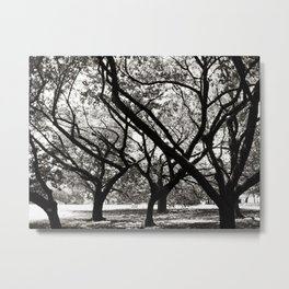 Trees of Harajuku Metal Print