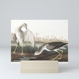 Tell-tale Godwit, or Snipe by John Audubon Mini Art Print