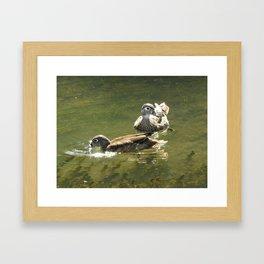 Sister Wood Ducks Framed Art Print