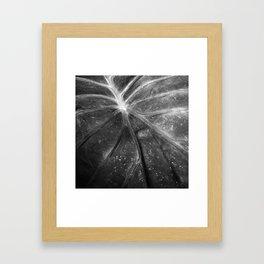 Abstract Leaf Black & White Framed Art Print