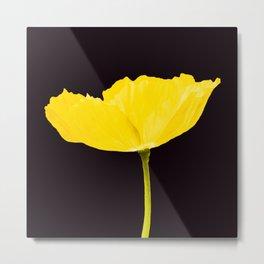 Yellow Poppy Black Background #decor #society6 #buyart Metal Print