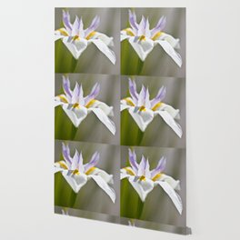 White Iris, close up - Botanical Photography Wallpaper