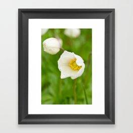 Windflower III Framed Art Print