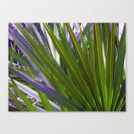 Saw Palmetto Tropicale Canvas Print