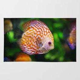 Discus fish Rug