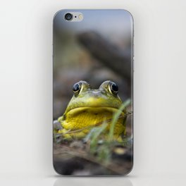Northern Green Frog iPhone Skin