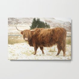 Red Highland Cattle in Winter Metal Print