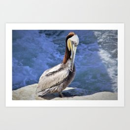 Brown Pelican in California by Reay of Light Photography Art Print