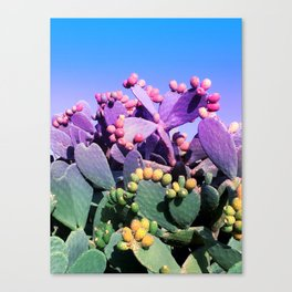 Sweet Rainbow Tropical Cactus #tropicalart #decor Canvas Print