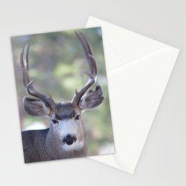 Watercolor Deer, Mule 05, RMNP, Squinter Stationery Cards