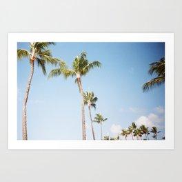 Kauai Palms Art Print