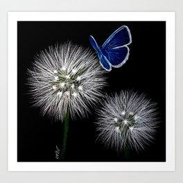 butterfly blue on dandelion Art Print