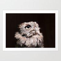 Big Eyes - Screech Owl Art Print