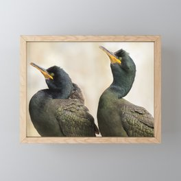 Shag, Farne Islands Framed Mini Art Print