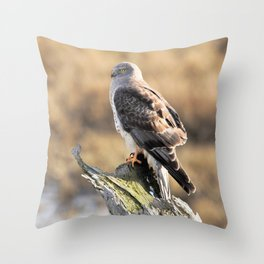 Sunlit Profile of a Northern Harrier Hawk on Driftwood Throw Pillow