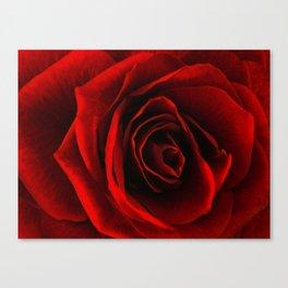 rose d'amour Canvas Print