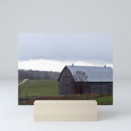 Barn and the Cattle on the hill Mini Art Print