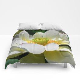 Beauty-0 Comforters