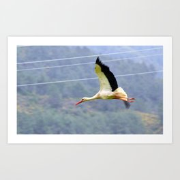 Stork In Flight Art Print
