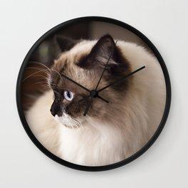 Chocolate Ragdoll Cat Wall Clock