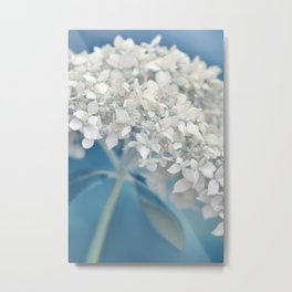 Beautiful White Hydrangea 276 Metal Print