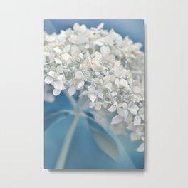 Beautiful White Hydrangea 276 Metal Print