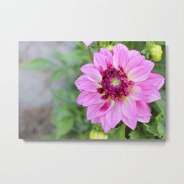 Marquette Pink Flower Metal Print