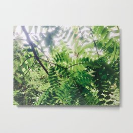 Sunlit Fern Leaves Metal Print