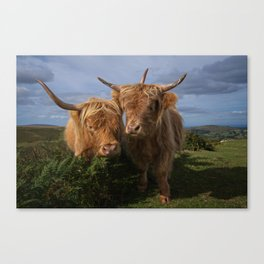 Highland Cows Canvas Print
