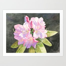 Pink Rhododendron Art Print