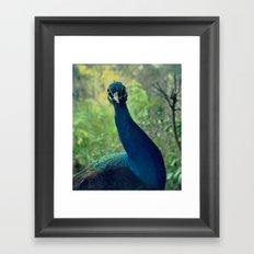 Roman Peacock Framed Art Print