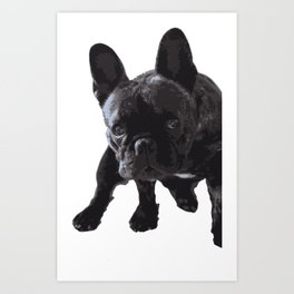 The guilty French Bulldog Art Print