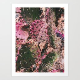 Pink Winter Cacti in Palo Duro Canyon, Texas Art Print