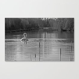 Heart of Gold swans in black and white. Canvas Print