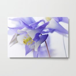 Columbine flower macro 285 Metal Print