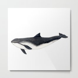 Harbour porpoise (Phocoena phocoena) Metal Print