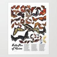 Butterflies of Maine Chart Art Print