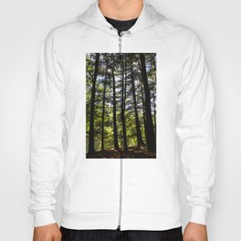 Stand of Trees Hoody