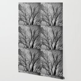 Black and White Crows Black Birds in a Tree Bokah Rustic A275 Wallpaper