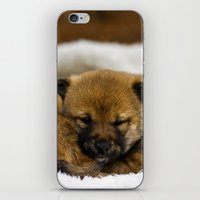 shiba inu iPhone & iPod Skins featuring Red Shiba Inu Puppy by Blue Lightning Creative
