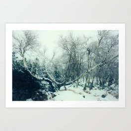 winter birch Art Print