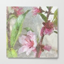 Fading Peach Blossom Watercolor Metal Print