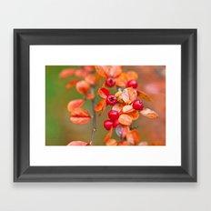 Autumnal Cotoneaster 9379 Framed Art Print