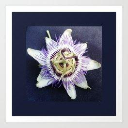 flower and nature - blue flower Art Print