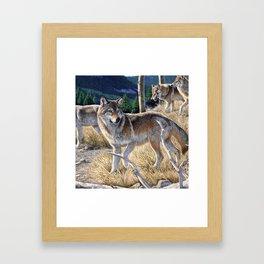 Wolf in winter forest Framed Art Print