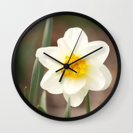The warmth of spring narcissus (lent lily) Wall Clock